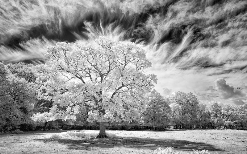 Beyond Visible Light – Infrared Photography From Camera To Print Stratford-upon-Avon